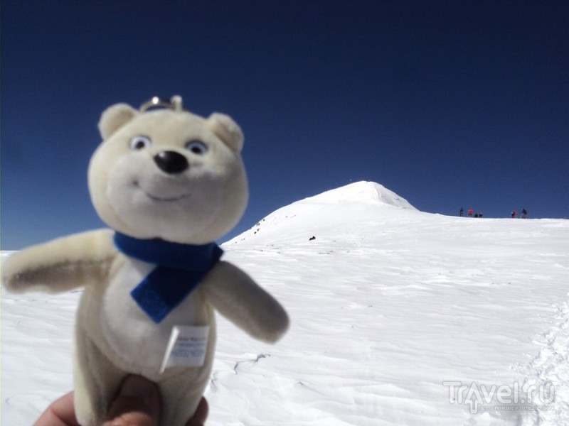 Медведь путешественник / Россия