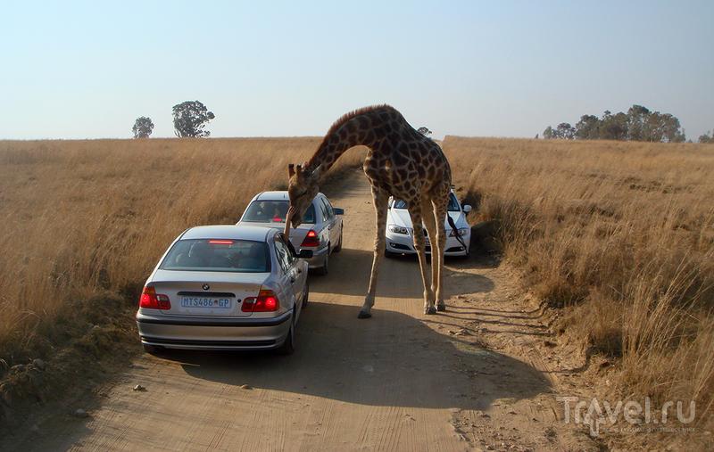 Пробки в Африке / ЮАР