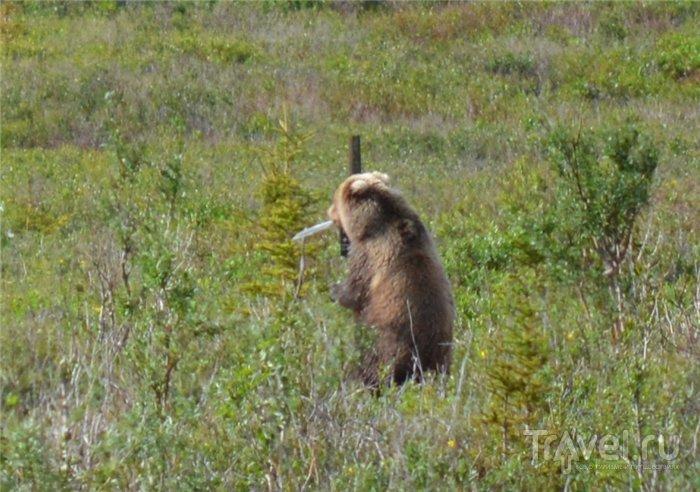 """Триллер """"Как человек медведя напугал"""" / США"""