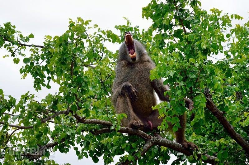 Южноафриканское сафари и Пауль Крюгер / Фото из ЮАР