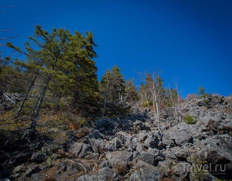 Двухдневный трек на гору Ольховая (Приморский край) / Фото из России