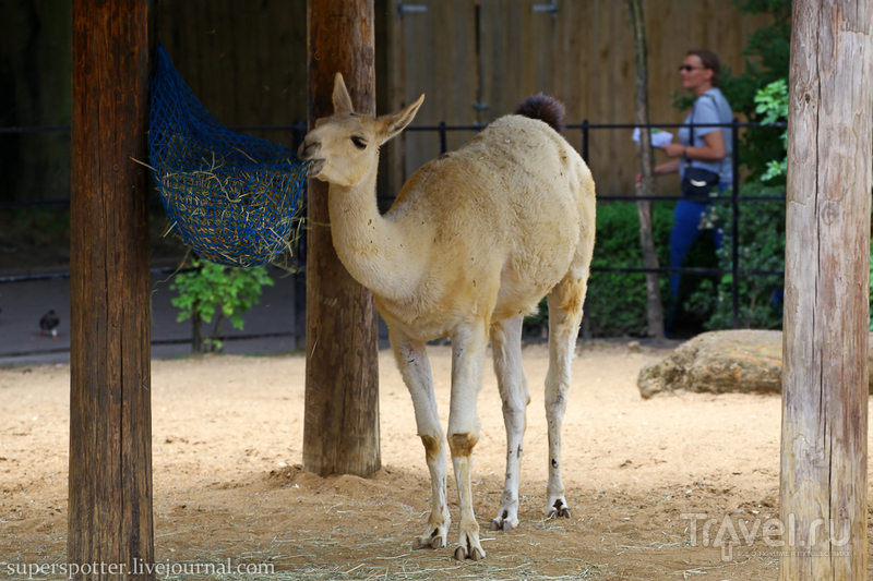 Лондон. ZSL London Zoo / Фото из Великобритании