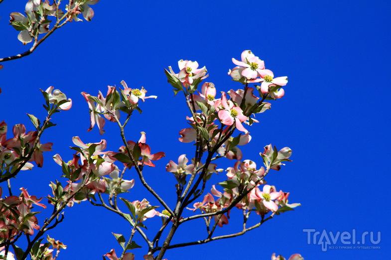 Весенний Вашингтон / Фото из США