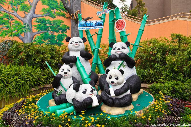 Панды и другие обитатели гонконгского Ocean Park / Фото из Гонконга