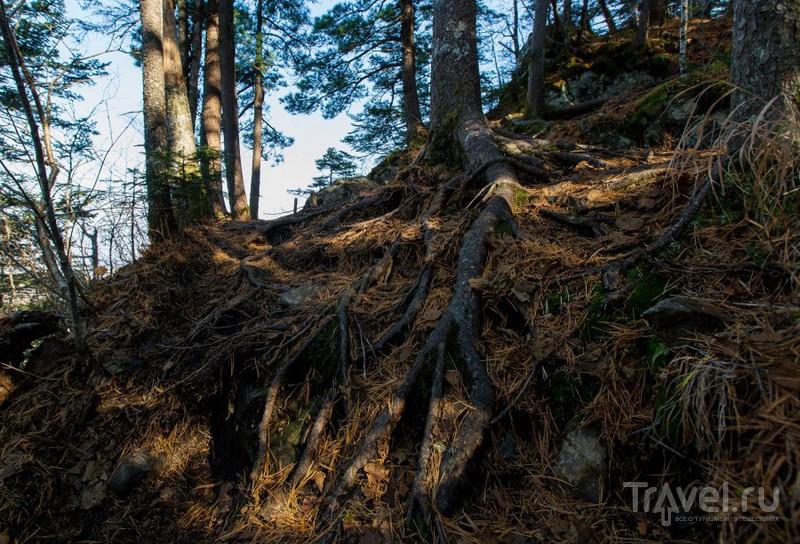 Восхождение на гору Фалаза (Литовка). Приморский край / Фото из России