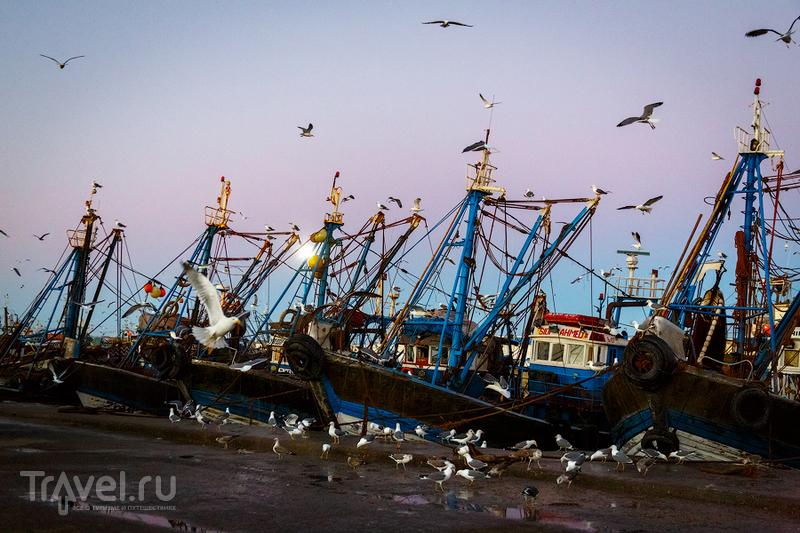 Золотое утро в порту Эссуэйры / Фото из Марокко
