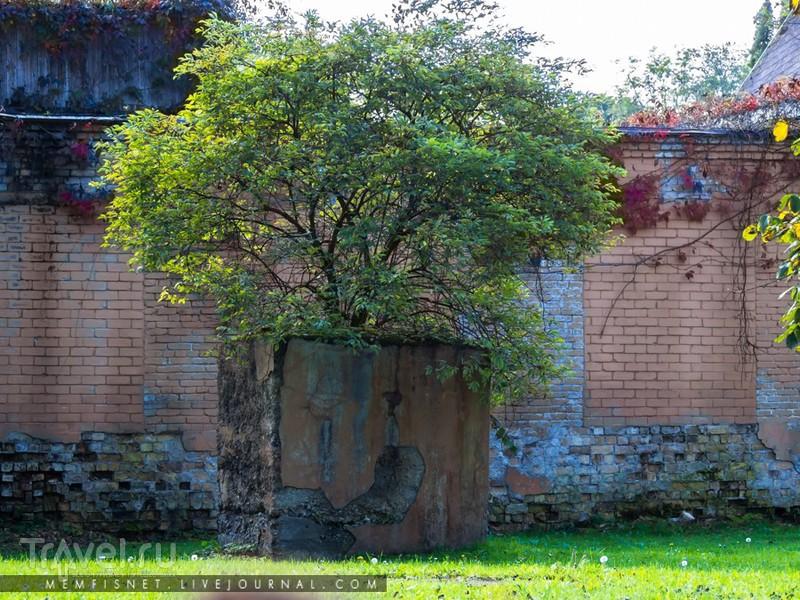 Сигулдский замок / Фото из Латвии