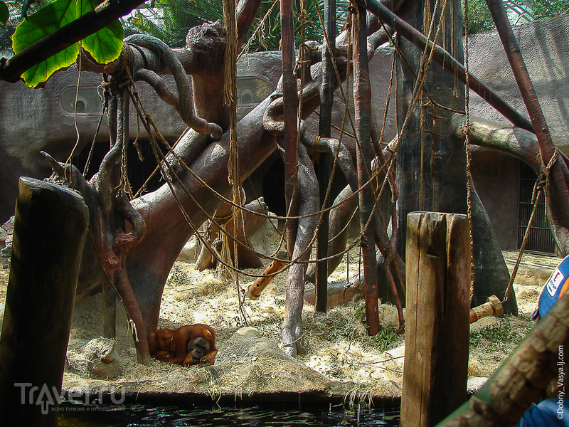 Пражский зоопарк / Фото из Чехии
