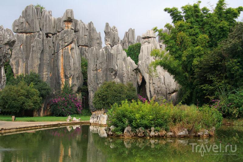 Каменный лес / Китай