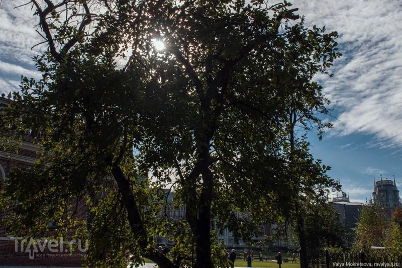 """Музей-заповедник """"Царицыно"""" / Фото из России"""