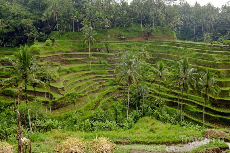 Бали в сезон дождей / Фото из Индонезии