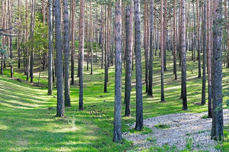 Сербия: горный курорт Златибор / Фото из Сербии