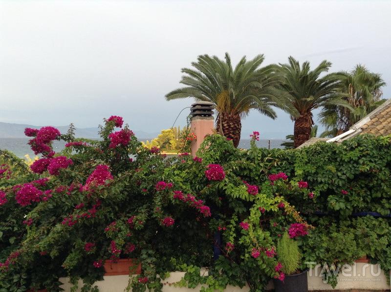 Цветы Корфу / Греция