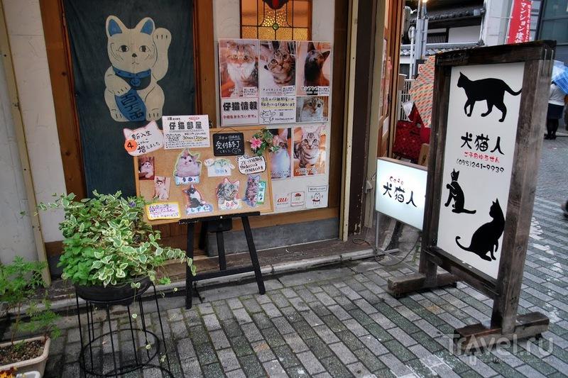 Кошачье кафе в Токио / Япония