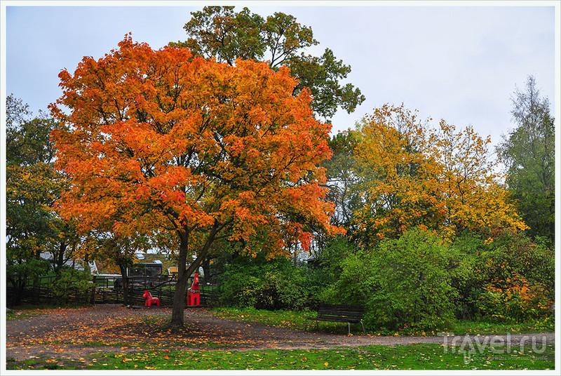 Осеннее настроение Стокгольма: Неповторимый Скансен / Фото из Швеции