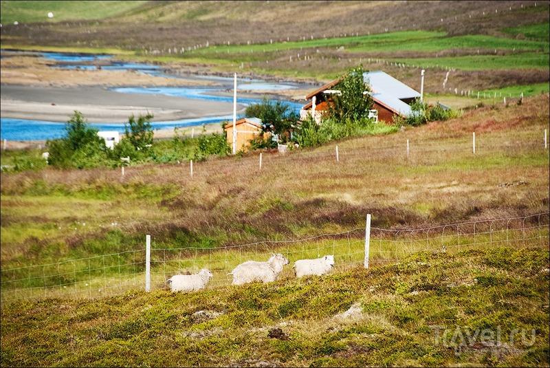Исландия, западные фьорды / Фото из Исландии
