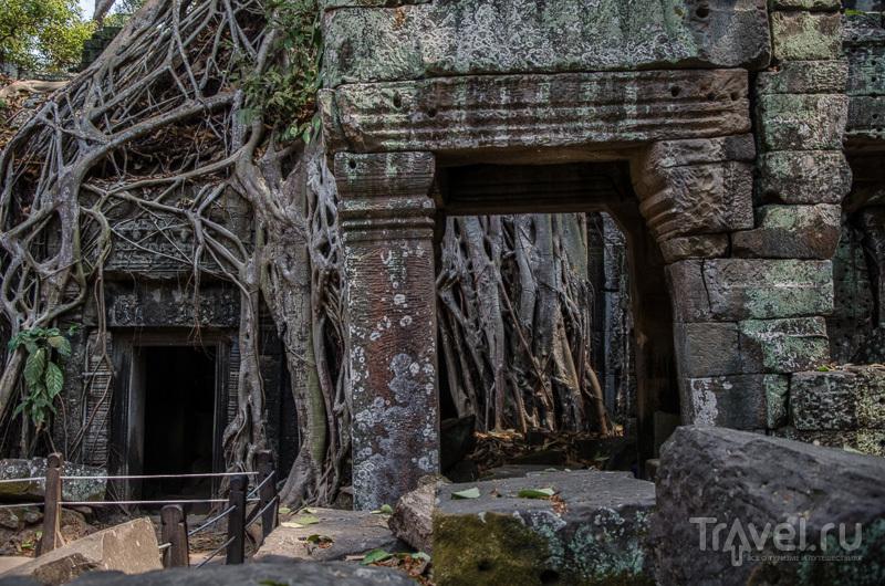 Строительство храма Та-Пром завершилось в 1186 году / Камбоджа