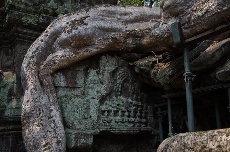 Дерево против камня / Камбоджа