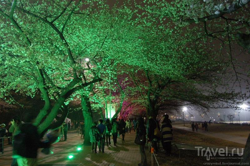 Сеул в апреле / Южная Корея