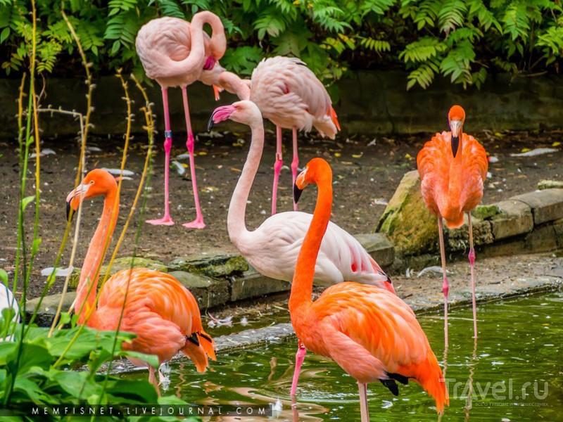 Рижский зоопарк / Фото из Латвии