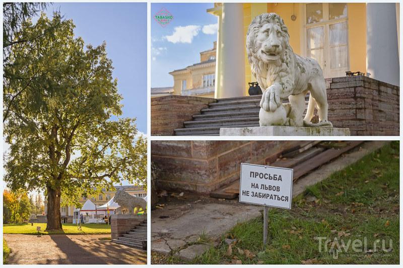 Последние дни сентября в усадьбе Марьино / Фото из России