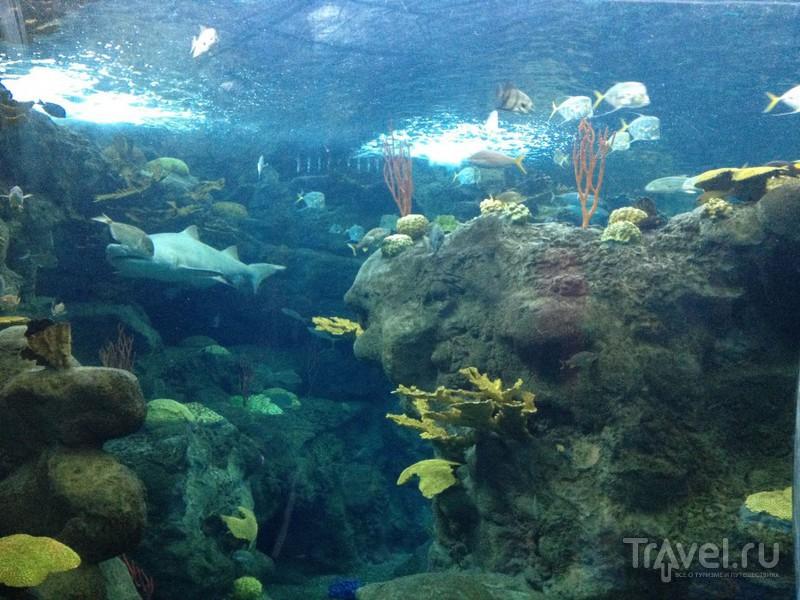 The Florida Aquarium. Что посетить  в Тампе? / США