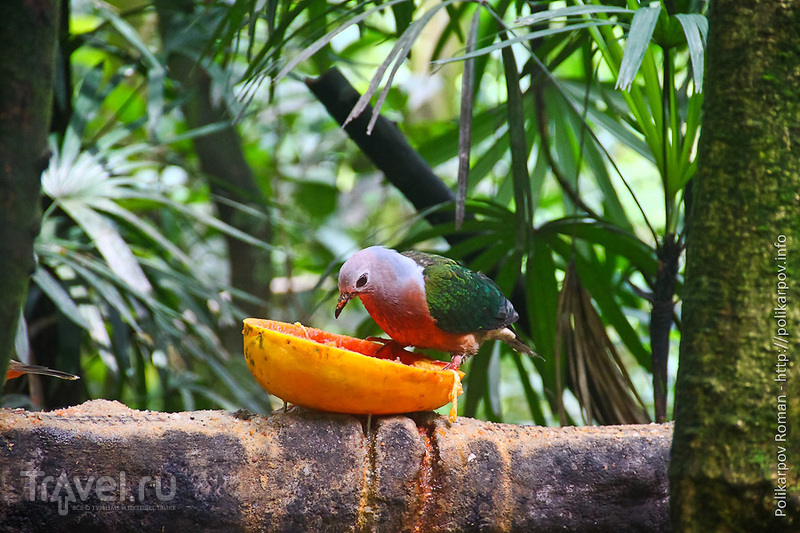 Парк птиц в Сингапуре / Фото из Сингапура