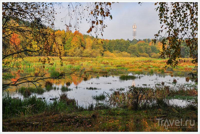 Стокгольм: Зеленый, золотой, багряный... / Фото из Швеции