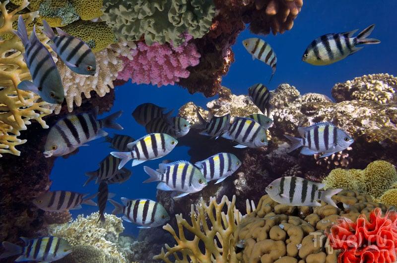 Подводный мир Косумеля