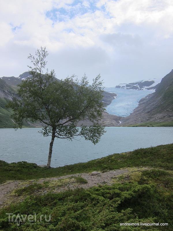 Ледник Свартисен / Фото из Норвегии