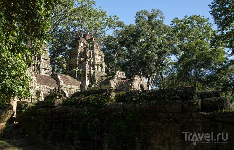 Та Пром имени Анджелины Джоли, камбоджийский храм с динозавром / Фото из Камбоджи