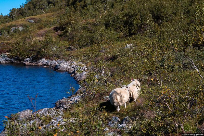 Путешествие через всю Норвегию. Снова в горы / Фото из Норвегии