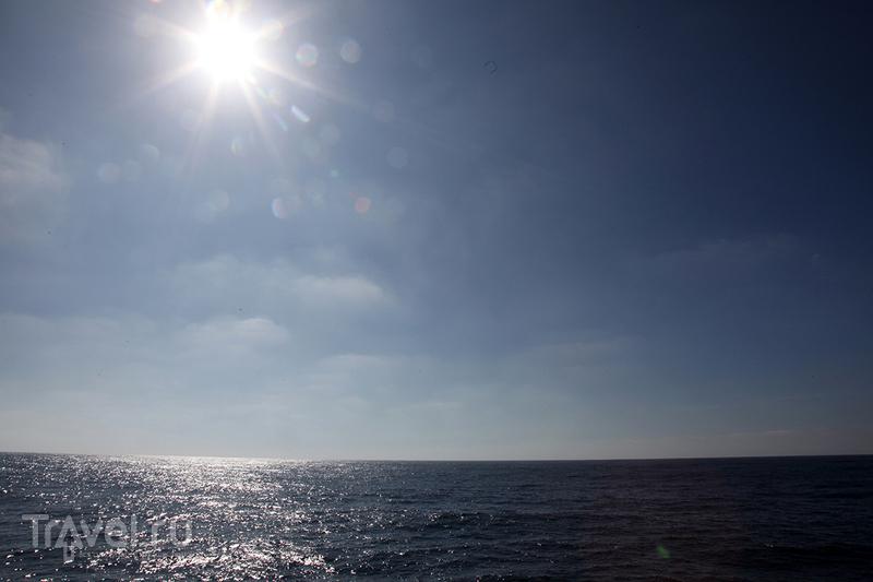 Смертельный номер! Дайвинг с Большой Белой Акулой / Мексика