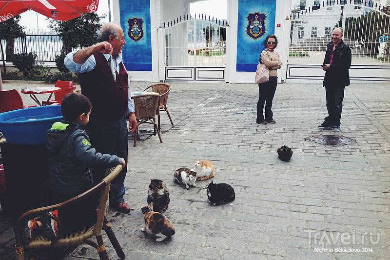 Адалары или Принцевы острова. Прогулка по Хейбелиаде / Турция