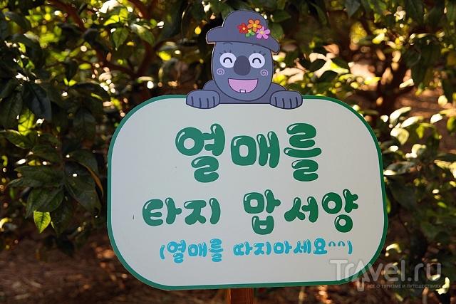 Общее впечатление от Чечжу / Южная Корея