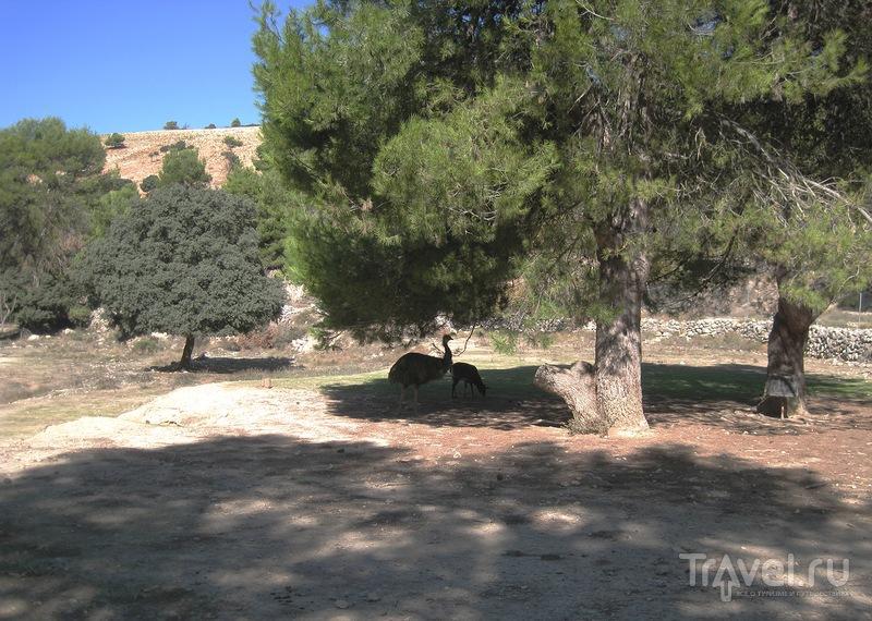Сафари-парк Айтана / Фото из Испании
