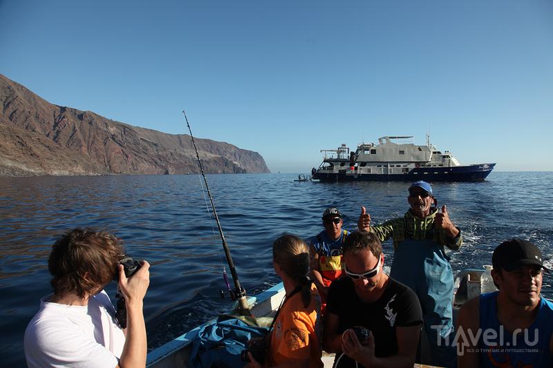 Остров Гуаделупе. Большие Белые Акулы / Мексика