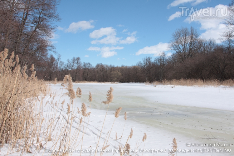 Воронежский биосферный заповедник зимой