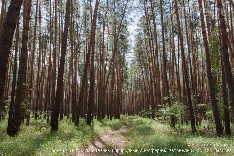 Лес в Воронежском биосферном заповеднике