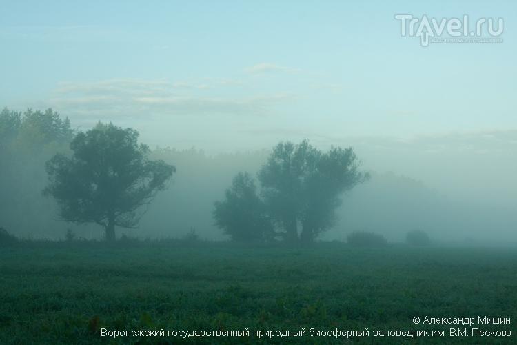 Воронежский биосферный заповедник в тумане