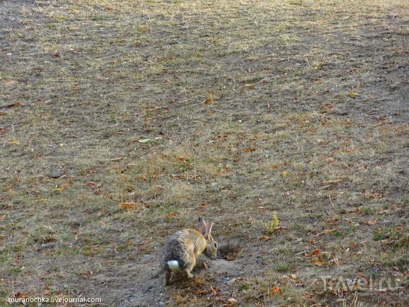 Дюссельдорф зелёный: парки, скверы и много зайцев / Германия