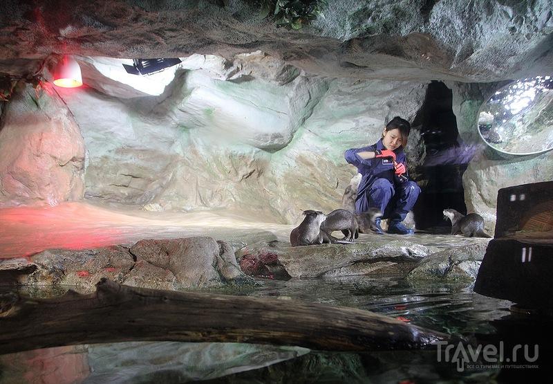 Океанариум COEX Aquarium / Фото из Южной Кореи