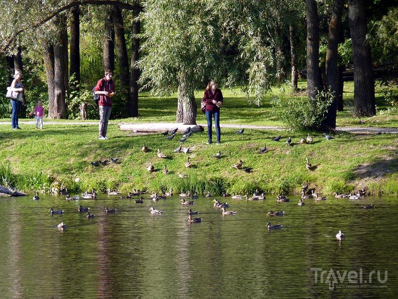 Псков. От пешеходного до Кузнецкого моста и обратно / Фото из России