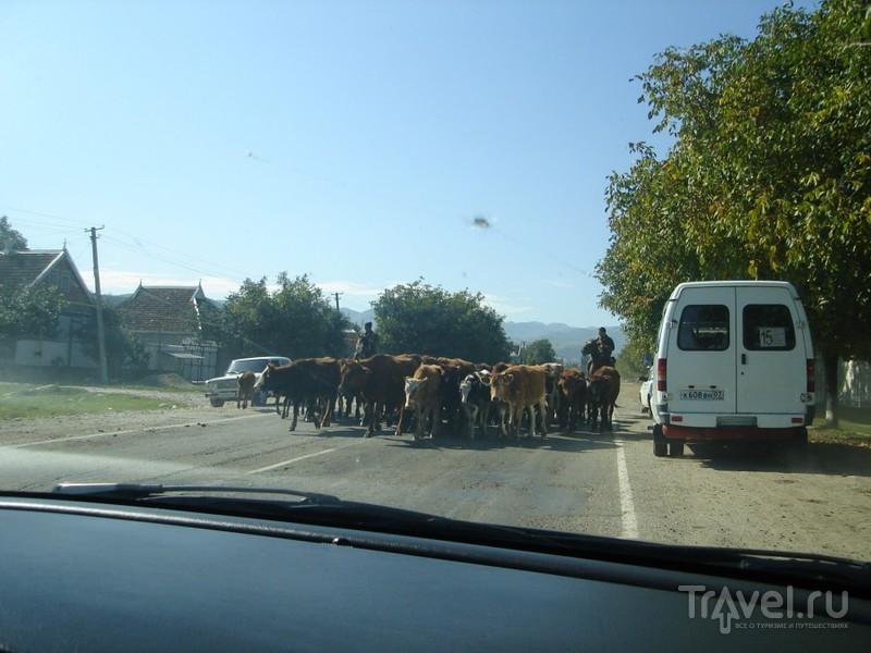 Северный Кавказ. Из Пятигорска в Приэльбрусье / Фото из России