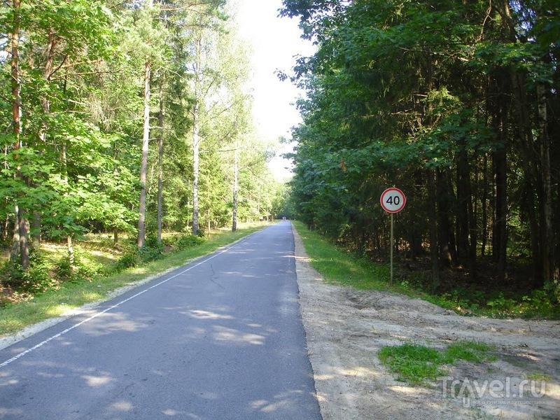По Беловежской Пуще на велосипедах. Сбыча мечт / Белоруссия