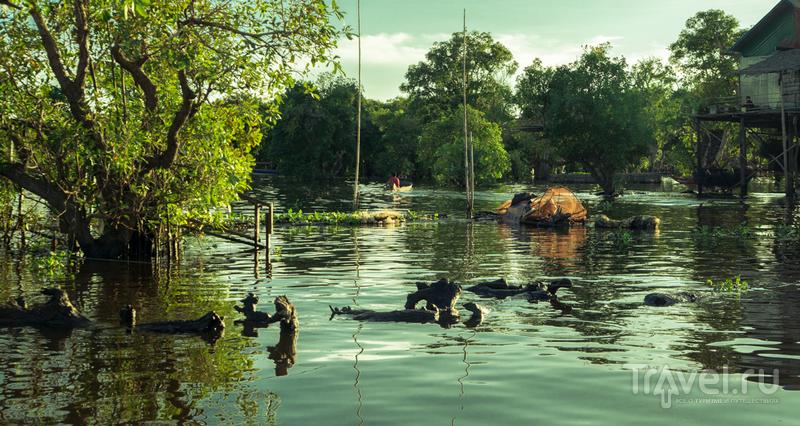 Кампонг Плук. Деревня на сваях на озере Тонле Сап / Фото из Камбоджи