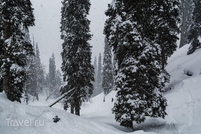 Индия. Гульмарг. Как снимать в снегопад? / Индия