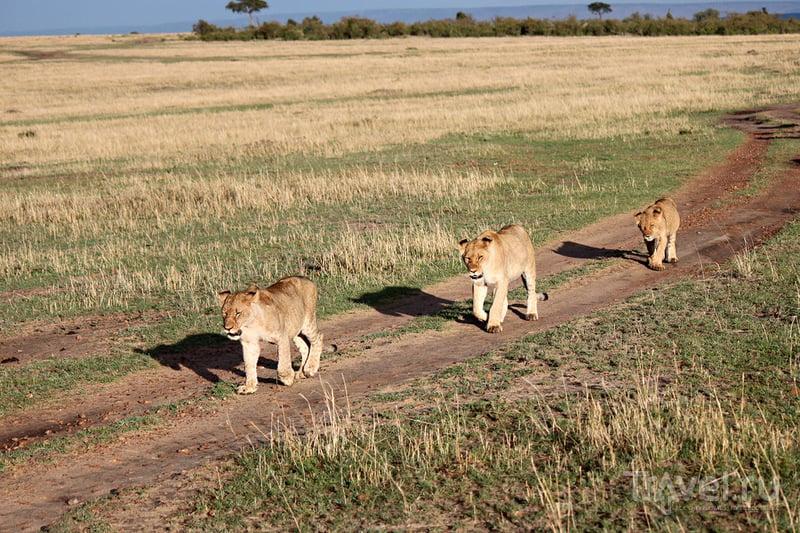 Утро в Масаи-Мара / Кения