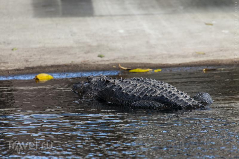США. Национальный парк Everglades / Фото из США