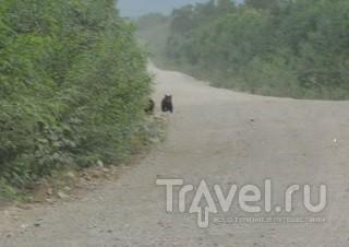 Камчатка: страна медведей, вулканов и красной икры / Россия
